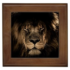 African Lion Mane Close Eyes Framed Tiles