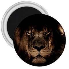 African Lion Mane Close Eyes 3  Magnets by BangZart