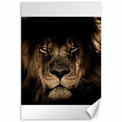 African Lion Mane Close Eyes Canvas 12  X 18