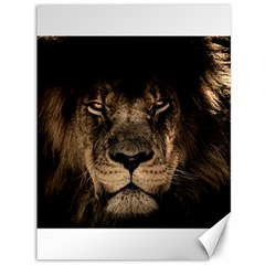 African Lion Mane Close Eyes Canvas 36  X 48