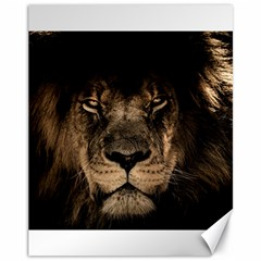 African Lion Mane Close Eyes Canvas 11  X 14