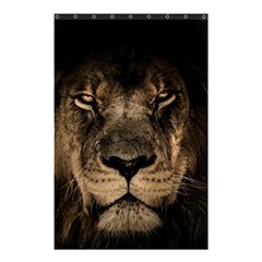 African Lion Mane Close Eyes Shower Curtain 48  X 72  (small)