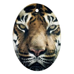 Tiger Bengal Stripes Eyes Close Ornament (oval) by BangZart