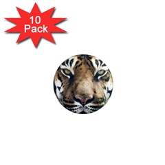 Tiger Bengal Stripes Eyes Close 1  Mini Magnet (10 Pack)