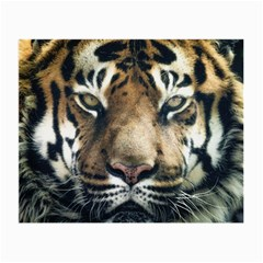 Tiger Bengal Stripes Eyes Close Small Glasses Cloth
