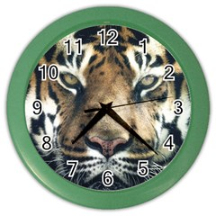 Tiger Bengal Stripes Eyes Close Color Wall Clocks by BangZart