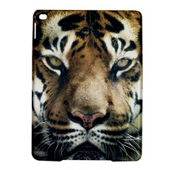 Tiger Bengal Stripes Eyes Close Ipad Air 2 Hardshell Cases by BangZart