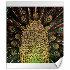 Peacock Feathers Wheel Plumage Canvas 20  X 24
