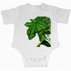 Plant Berry Leaves Green Flower Infant Creepers