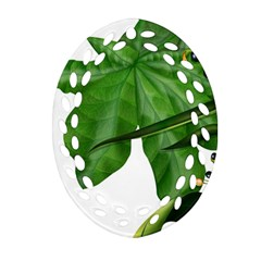 Plant Berry Leaves Green Flower Oval Filigree Ornament (two Sides)