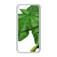 Plant Berry Leaves Green Flower Apple Iphone 5c Seamless Case (white)