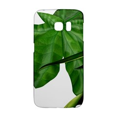 Plant Berry Leaves Green Flower Galaxy S6 Edge by BangZart