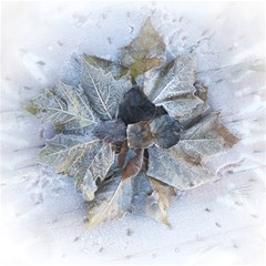 Winter Frost Ice Sheet Leaves Magic Photo Cubes by BangZart