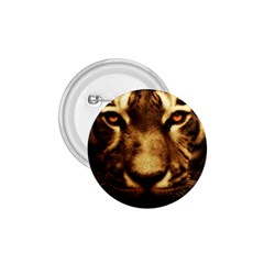 Cat Tiger Animal Wildlife Wild 1 75  Buttons by Celenk