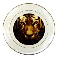 Cat Tiger Animal Wildlife Wild Porcelain Plates
