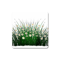 Spring Flowers Grass Meadow Plant Square Magnet