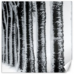 Row Trees Nature Birch Canvas 16  X 16