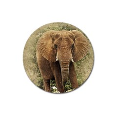 Elephant Animal Art Abstract Magnet 3  (round) by Celenk