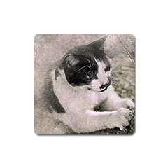 Cat Pet Art Abstract Vintage Square Magnet