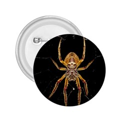 Nsect Macro Spider Colombia 2 25  Buttons by Celenk