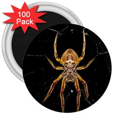 Nsect Macro Spider Colombia 3  Magnets (100 Pack) by Celenk