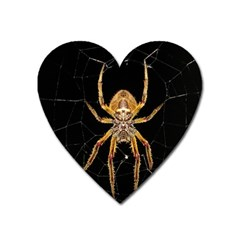 Nsect Macro Spider Colombia Heart Magnet by Celenk