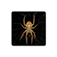 Nsect Macro Spider Colombia Square Magnet