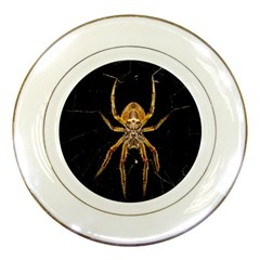 Nsect Macro Spider Colombia Porcelain Plates