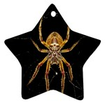 Nsect Macro Spider Colombia Star Ornament (Two Sides) Front