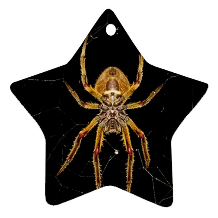 Nsect Macro Spider Colombia Star Ornament (Two Sides)