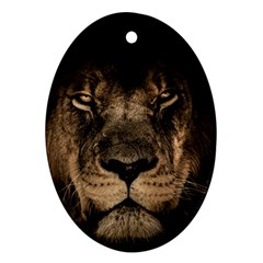 African Lion Mane Close Eyes Ornament (oval) by Celenk