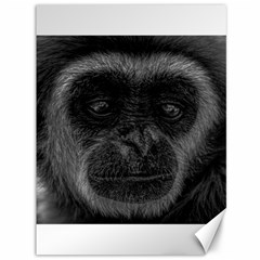 Gibbon Wildlife Indonesia Mammal Canvas 36  X 48   by Celenk