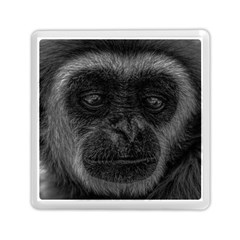 Gibbon Wildlife Indonesia Mammal Memory Card Reader (square)