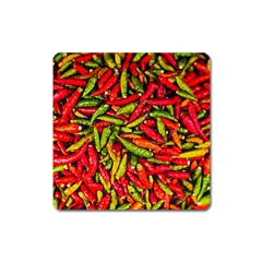 Chilli Pepper Spicy Hot Red Spice Square Magnet