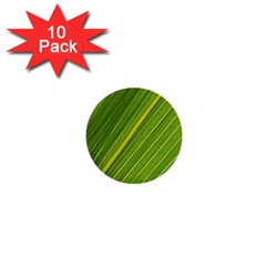 Leaf Plant Nature Pattern 1  Mini Buttons (10 Pack)  by Nexatart
