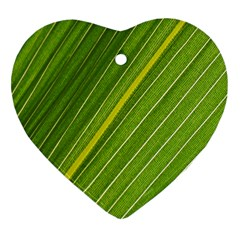 Leaf Plant Nature Pattern Heart Ornament (two Sides)