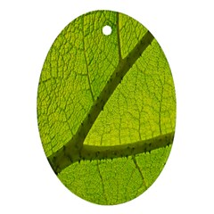 Green Leaf Plant Nature Structure Oval Ornament (two Sides)
