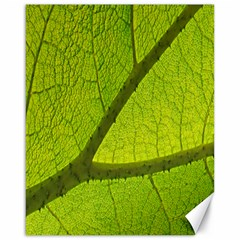 Green Leaf Plant Nature Structure Canvas 16  X 20   by Nexatart