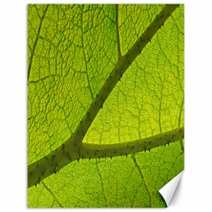 Green Leaf Plant Nature Structure Canvas 18  X 24