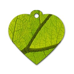 Green Leaf Plant Nature Structure Dog Tag Heart (two Sides)