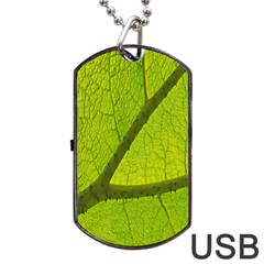 Green Leaf Plant Nature Structure Dog Tag Usb Flash (one Side)