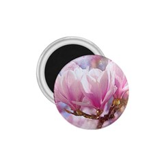 Flowers Magnolia Art Abstract 1 75  Magnets