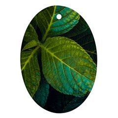 Green Plant Leaf Foliage Nature Ornament (oval) by Nexatart