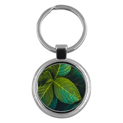 Green Plant Leaf Foliage Nature Key Chains (round)  by Nexatart