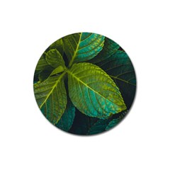 Green Plant Leaf Foliage Nature Magnet 3  (round)