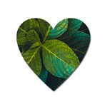 Green Plant Leaf Foliage Nature Heart Magnet Front