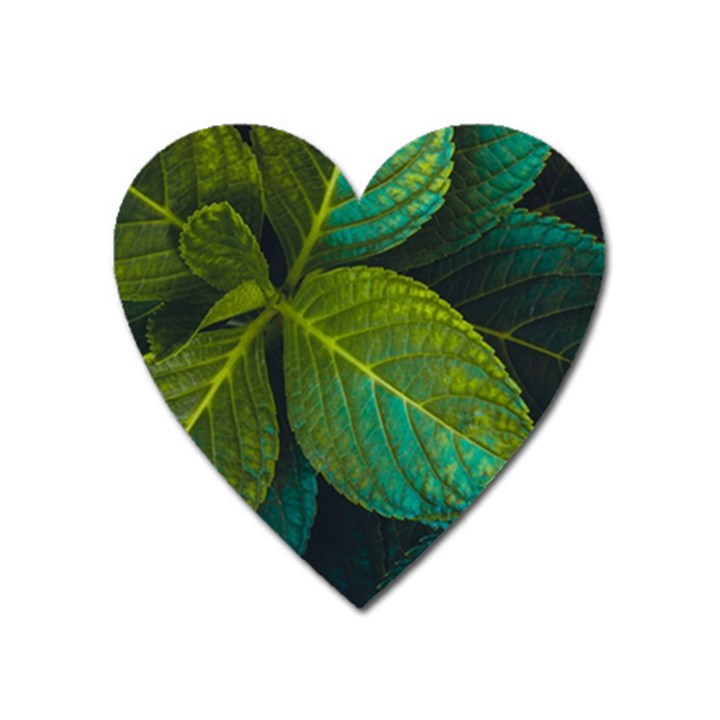 Green Plant Leaf Foliage Nature Heart Magnet