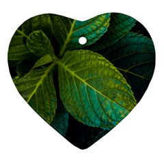 Green Plant Leaf Foliage Nature Heart Ornament (two Sides) by Nexatart