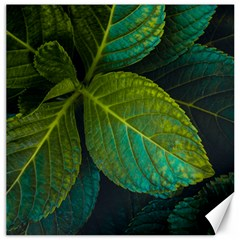 Green Plant Leaf Foliage Nature Canvas 16  X 16   by Nexatart