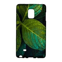 Green Plant Leaf Foliage Nature Galaxy Note Edge by Nexatart